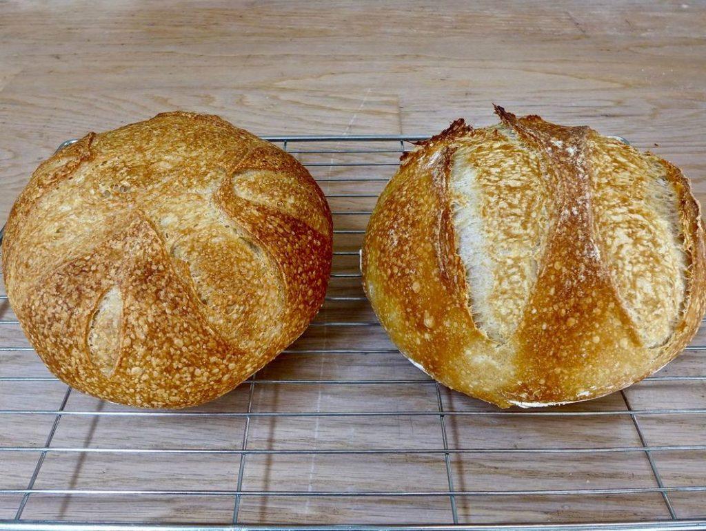 Dr Doughlittle | Sourdough Bread