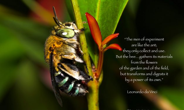 PICTURE POSTERS SERIES-BEES-1
