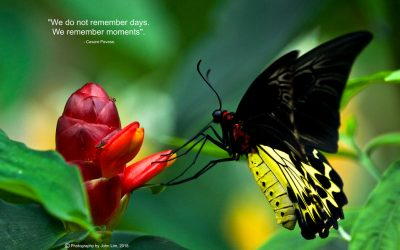 PICTURE POSTERS SERIES-INSECTS-1