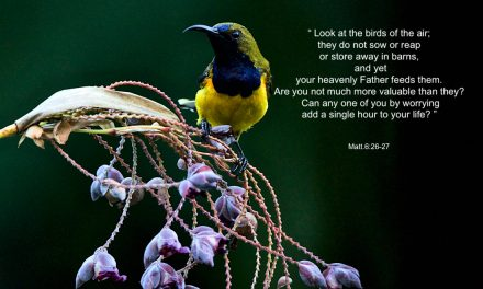 PICTURE POSTERS SERIES-BIRDS-1
